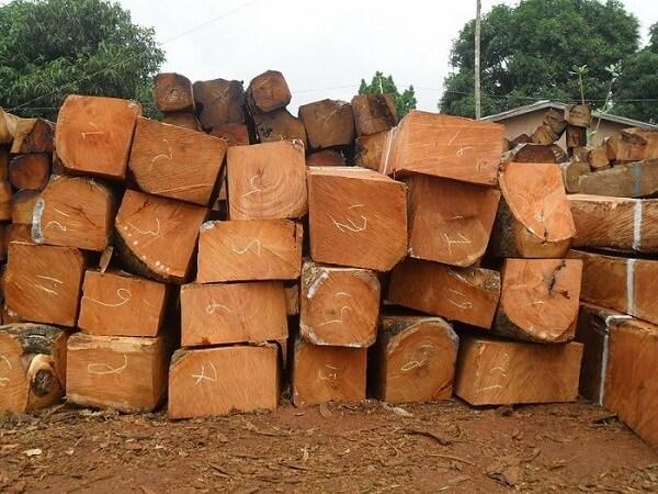 gỗ gụ nhập khẩu