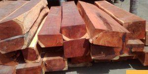 Gỗ Hương đá là gỗ gì? Tổng quát chung về gỗ Hương đá