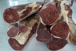 Gỗ Sưa là gỗ gì? Các loại gỗ Sưa có đặc điểm như thế nào