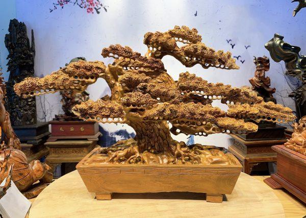 Cây Tùng Bonsai Gỗ Hương Ta